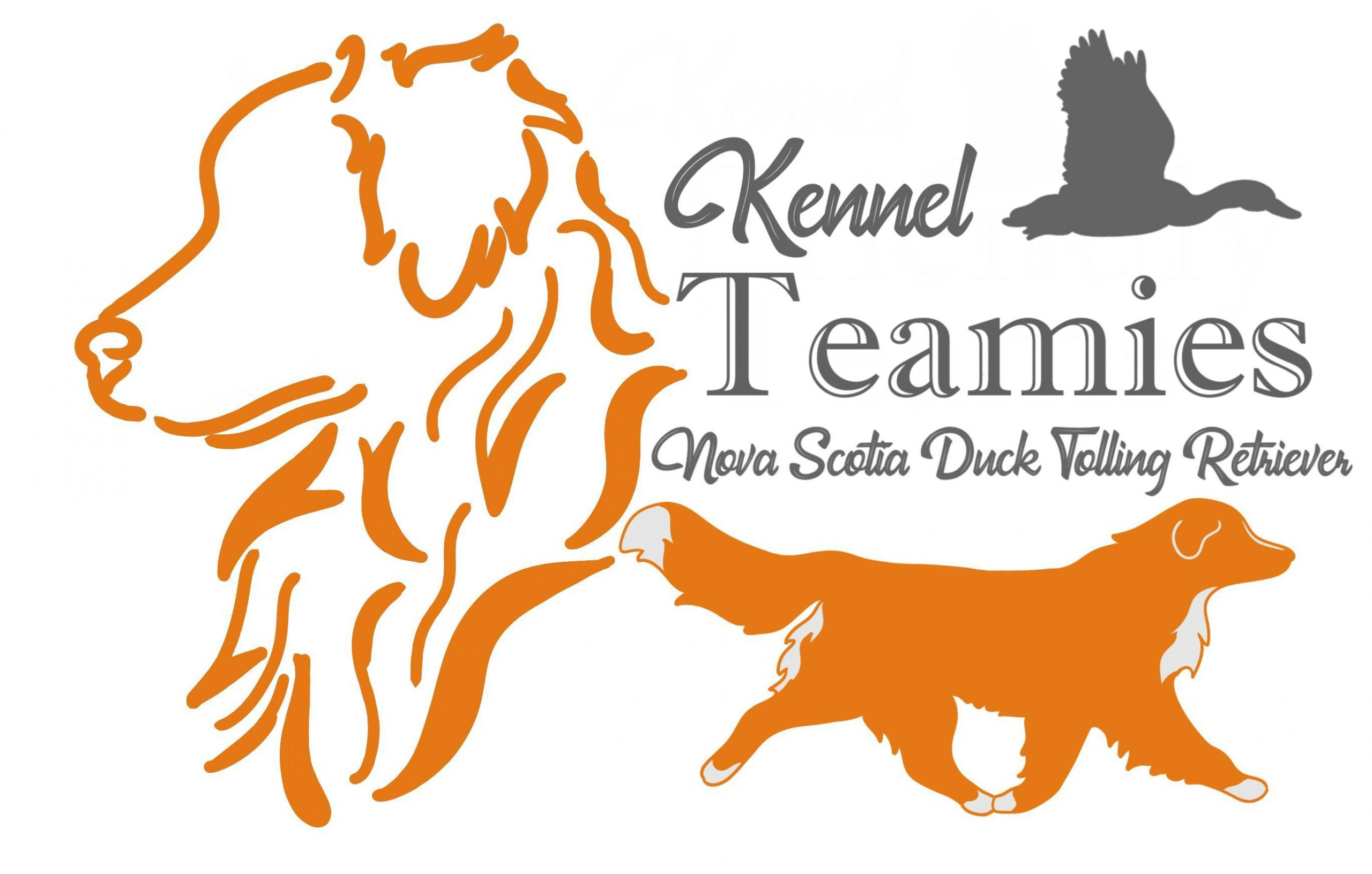 Kennel Teamies